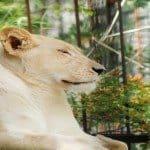 Best New York City Zoos & Gardens