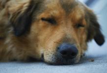 Selecting Pet Insurance